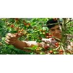 Кофе ARABICA 100% (Peru) зелёный  250 гр.