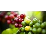 Кофе ARABICA 100% (Guatemala) зелёный 250 гр.